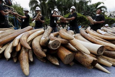 Yahoo urged to stop elephant ivory auctions on Japan site