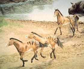 The Horse Talker: Evolution Of The Horse